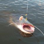 Ловля сома на Волге: особенности и секреты успешной рыбалки