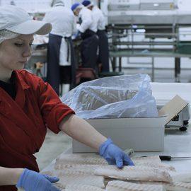Налаживание рыбоперерабатывающего производства в Тверской области