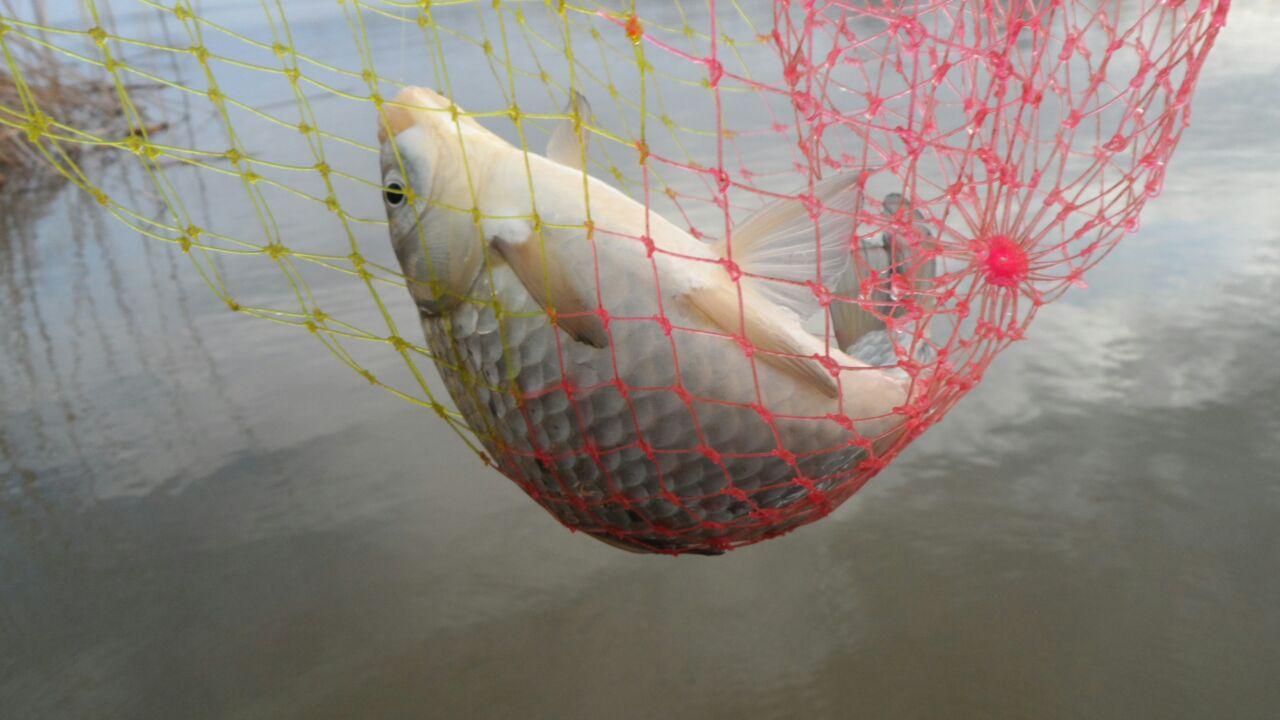Рыбалка на волге