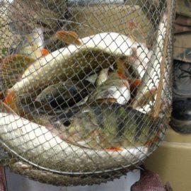 Как правильно ловить рыбу в дельте Волги весной