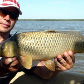 Осенний клев сазана: все, что нужно знать рыбаку
